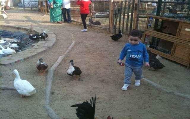 مزرعة «بوش باوز الخوانيج» مكان سياحي للأطفال في دُبي