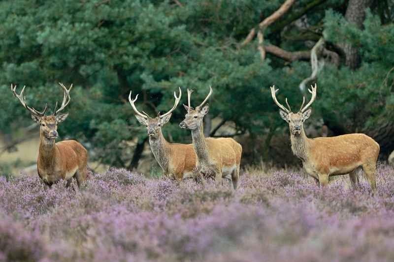 حديقة هوج فيلو الوطنيةHoge Veluwe National Park