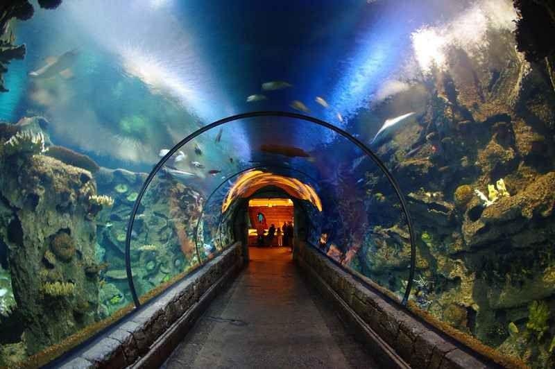 شارك ريف أكواريومShark Reef Aquarium