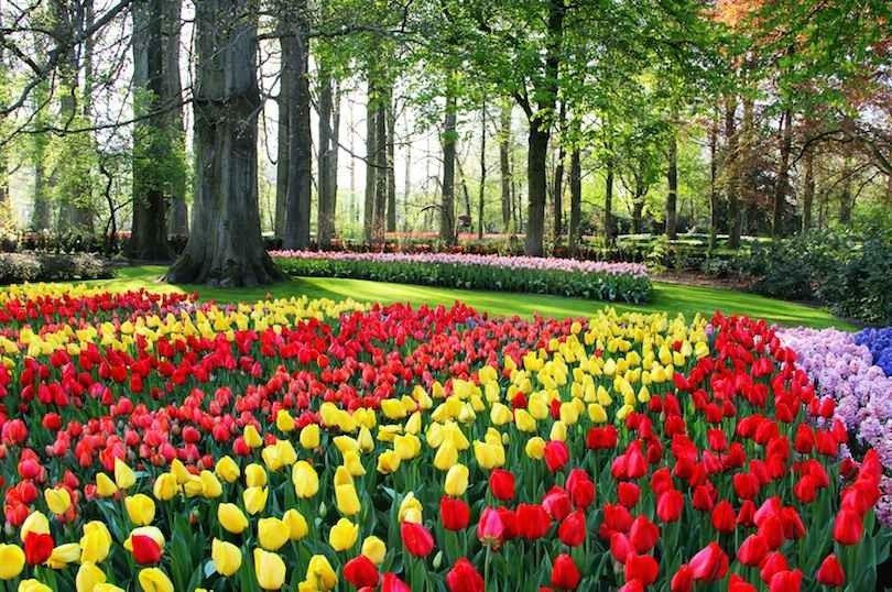 حدائق كويكنهوفKeukenhof Gardens