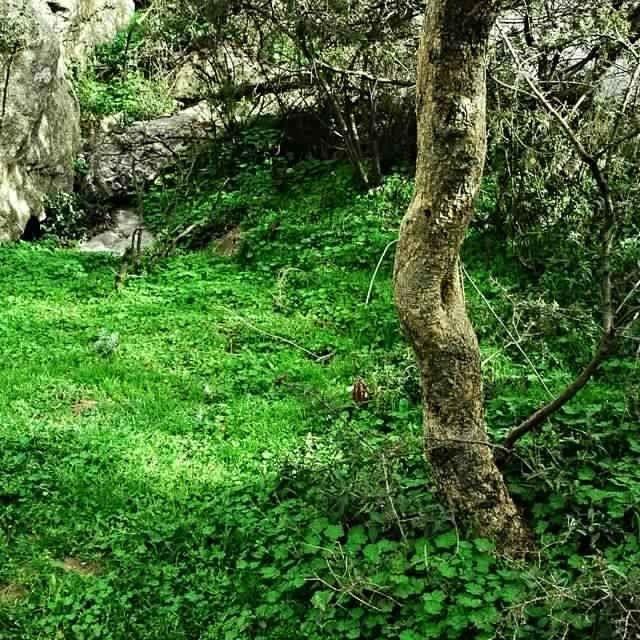 منتزه المحفارMahvar Park Tuhamah