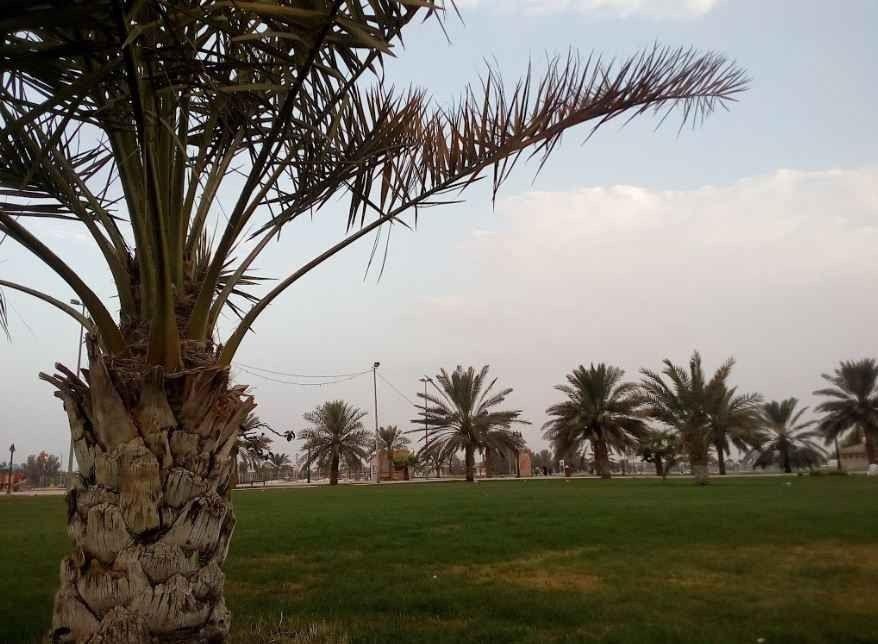 حديقة الرفيعة في بريدةAl Rafi'ah Park Buraydah