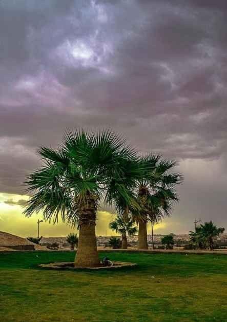 منتزه الملك عبد الله الوطني في بريدةKing Abdullah National Park Buraidah