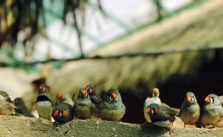 محمية جاردن تلنتس للطيورGarden Talents Reserve For Birds