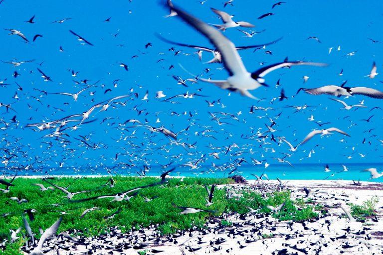 Photo of جزر سيشل ..جوهرة السياحة في إفريقيا وأجمل المحميات الطبيعية في العالم