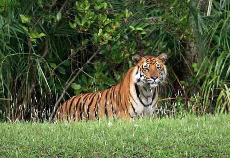 Sundarbans - سونداربانس