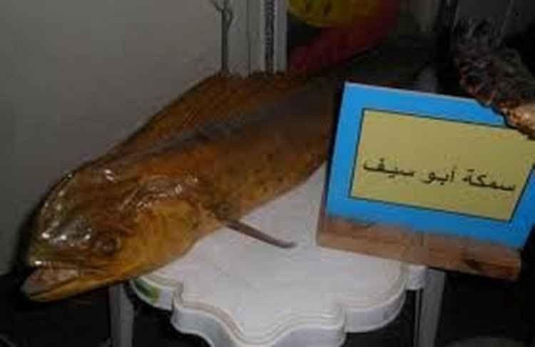 متحف الأحياء البحرية بالمدينة المنورة
