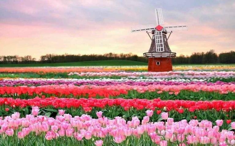 تكلفة السياحة في هولندا