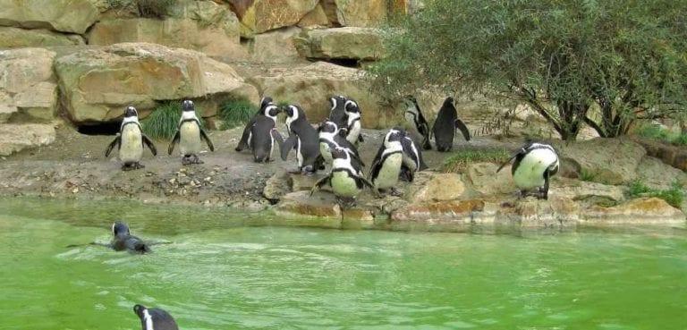 """- حديقة الحيوان """"برونكس""""..."""
