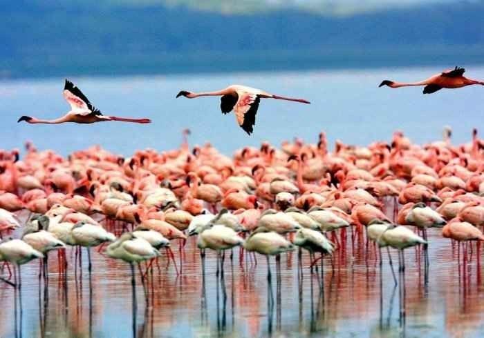 """""""بحيرة منيارة """" .. أهم اماكن السياحة في تنزانيا .."""