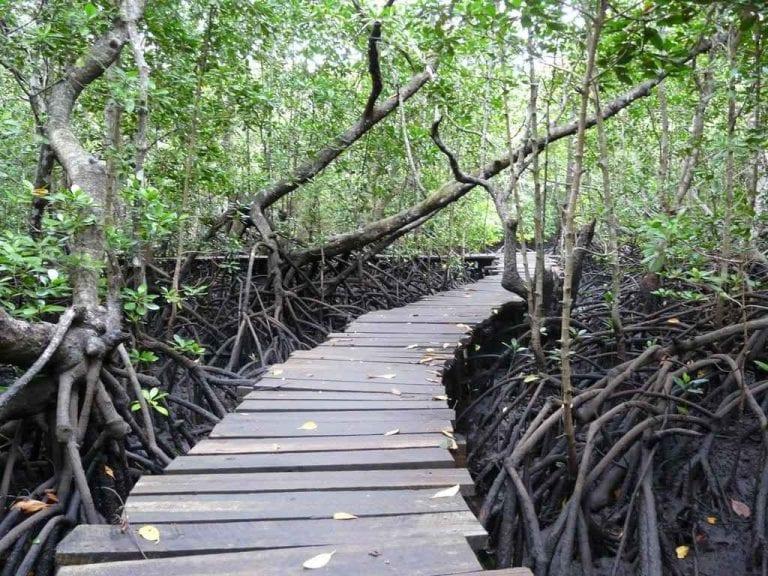""""""" غابة جوزانى """" .. اجمل اماكن السياحة في تنزانيا .."""