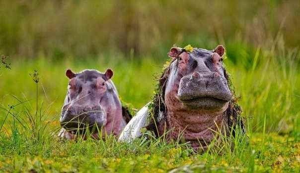 """"""" محمية سيلوس """" .. افضل اماكن السياحة في تنزانيا .."""
