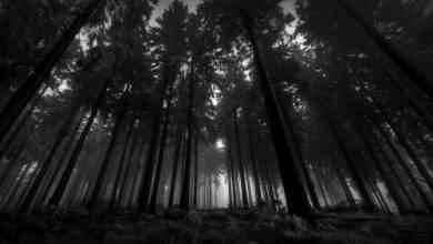 Photo of السياحة في الغابات السوداء المانيا .. طبيعة ساحرة وملاهي عالمية ومتاحف عريقة