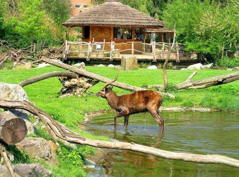 - حديقة حيوانات براغ...المكان المثالى لإسعاد الأطفال ..