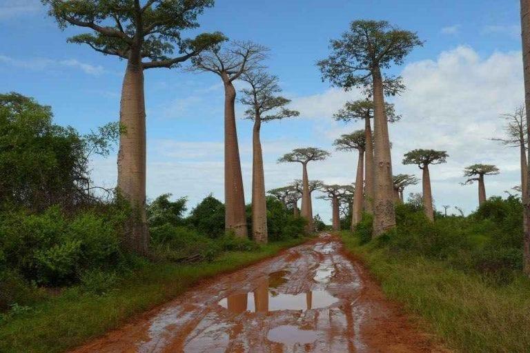 """- حديقة """"موروندافا""""..واحدة من اجمل اماكن السياحة في مدغشقر.."""