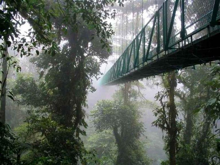 """"""" غابة مونتفردى المغيمة Monteverde Cloud Forest """" .."""