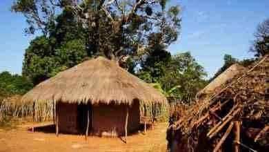 Photo of السياحة في غامبيا .. حيث أفضل الأماكن السياحية وقضاء رحلة مميزة لا تنسى…