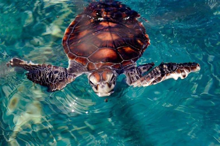 """"""" محمية السلاحف البحرية """" .."""