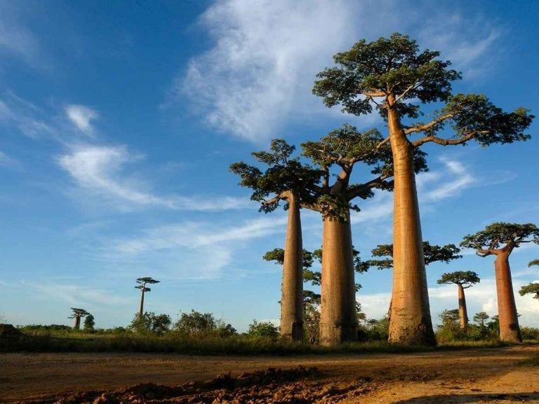 """- """"منتا سوا""""..واحدة من أهم اماكن السياحة في مدغشقر.."""