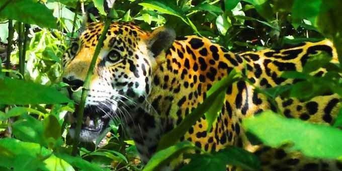 """"""" منتزه Corcovado """" .. افضل اماكن السياحة في كوستاريكا .."""