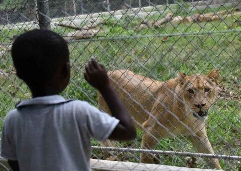 """- حديقة الحيوان """"فونتيستك بارك لى كورنيل""""..."""
