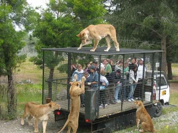 """- حديقة حيوانات """"باركوبونتا الأخضر""""..."""