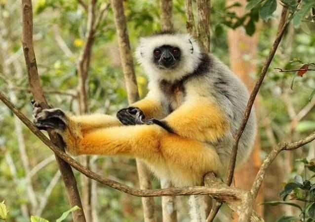 """- """"الغابة الاستوائية """"..لا تفوتك زيارتها عند السفر الى مدغشقر.."""