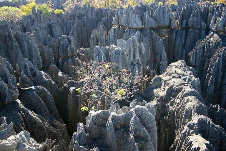 """- محمية """"تسينجى دى بيمارا""""..الأكبر فى مدغشقر.."""