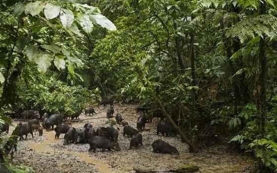 """"""" حديقة ياسونى الوطنية Yasuni National Park """" .. افضل معالم السياحة في الاكوادور .."""