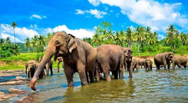 الاماكن السياحيه للاطفال في سريلانكا