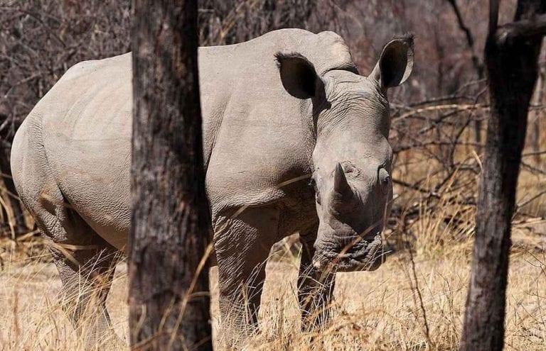 """- الحديقة الوطنية """" ماتوبو""""...واحدة من أهم معالم السياحة في زيمبابوى ..."""