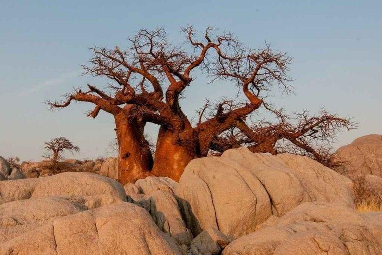 """"""" ماون Maun """" .. الاماكن السياحية في بوتسوانا .."""