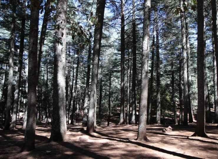 """"""" غابة سيدر غورو Forest Cedar Guru """" .. اهم معالم السياحة في افران .."""