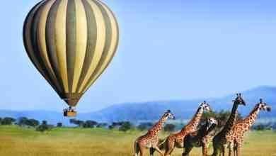 Photo of السياحة في كينيا .. المكان المثالى لعشاق المغامرة ورحلات السفارى ..