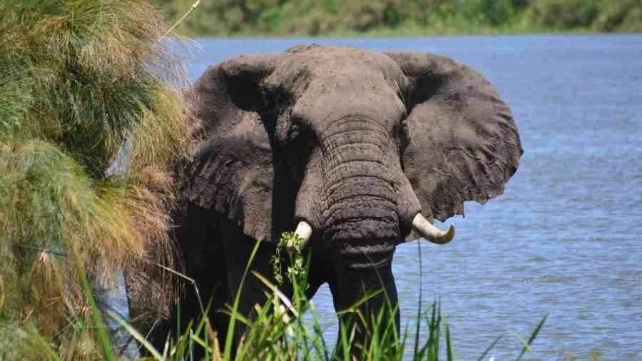 السياحه اوغندا اللون الاخضر 2-5-900x506.jpg