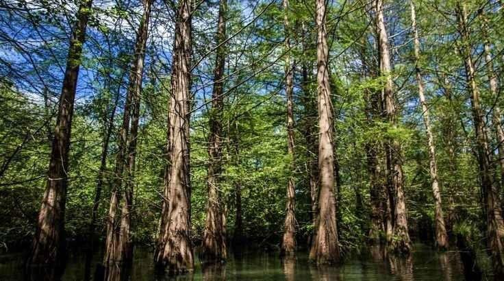 """- لا يفوتك زيارة """"الغابات"""" ..عند السفر الى الطارف..."""