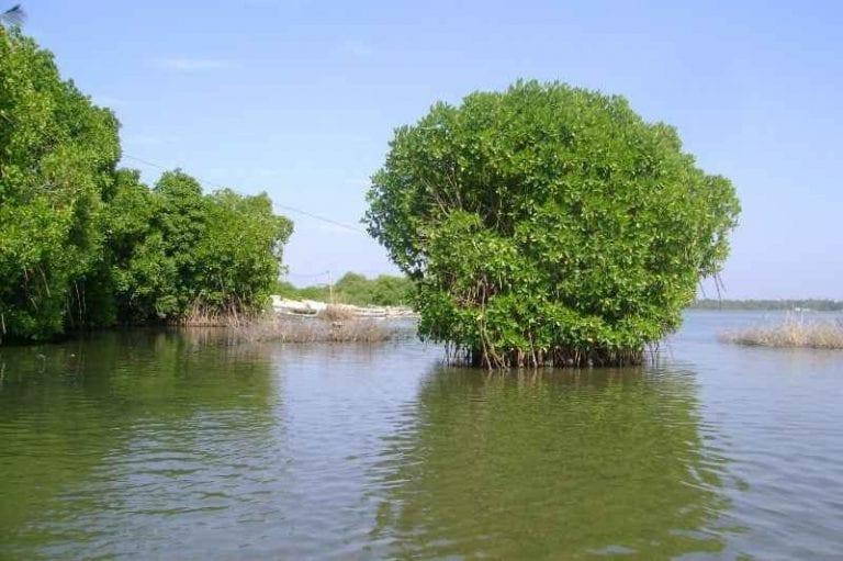 """بحيرة """"نيوجمبو""""..واحدة من أجمل الاماكن السياحية في نيوجمبو.."""