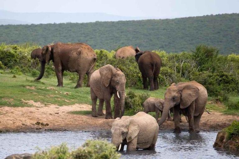 """"""" كاسان Kasane """" .. افضل اماكن السياحة في بوتسوانا .."""