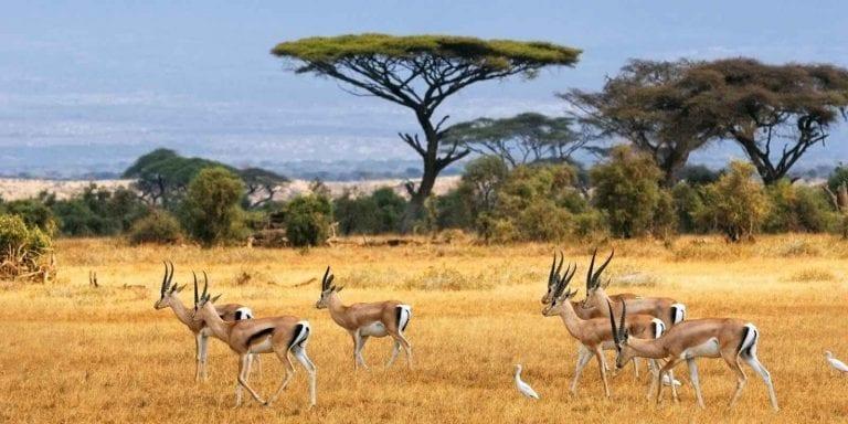 """السفر الى بوتسوانا .. """" حديقة تشوبى Chobe National Park Botswana """".."""