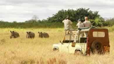تكلفة السياحة في كينيا Kenya