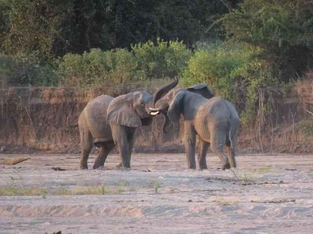 """"""" محمية موريمى Morimi Reserve in botswana """" .. افضل اماكن السياحة في بوتسوانا .."""