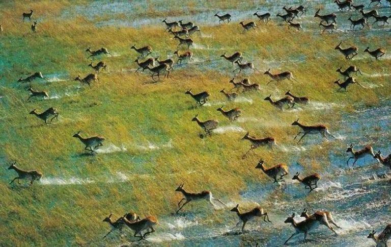 """"""" نهر أوكافانجو Okavango River """" .. الاماكن السياحية في بوتسوانا .."""