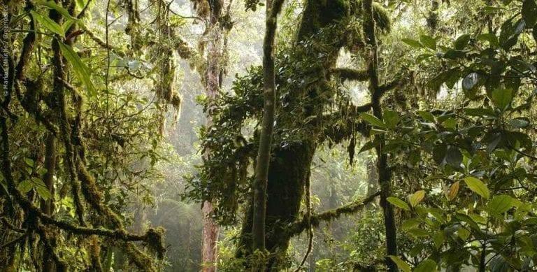 """"""" الغابات فى بابوا غينيا الجديدة Forests in Papua New Guinea """" .. الاماكن السياحية في بابوا غينيا الجديدة .."""