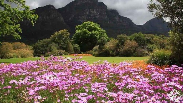 حديقة كيرستنبوش الوطنية النباتية