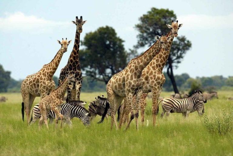 حديقة بلانسبيرج الوطنية (Pilanesberg National Park)