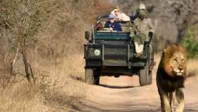 Photo of رحلات السفاري في جنوب افريقيا .. تعرّف عليها