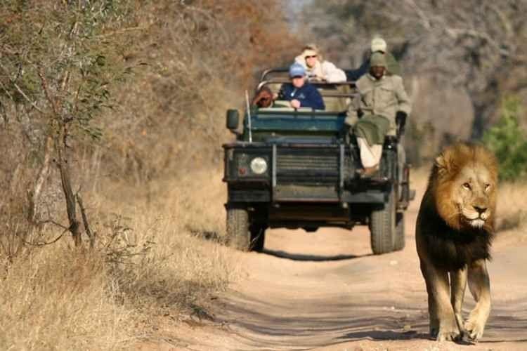 رحلات السفاري في جنوب افريقيا .. تعرّف عليها 9