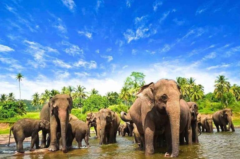 حديقة الفيلة - منتزهات في سريلانكا Sri Lanka
