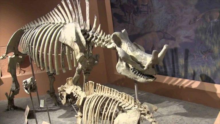 """""""المتحف الوطنى""""..مكانا مثاليا لإلتقاط أجمل الصور التذكارية برفقة الديناصورات .."""