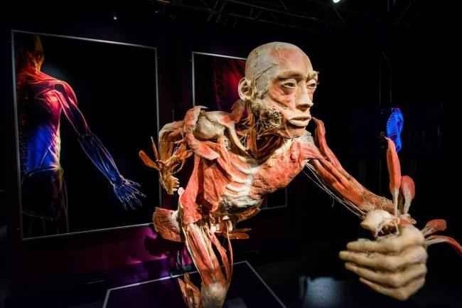 """"""" متحف الجسم البشرى Human Body Museum """" .."""